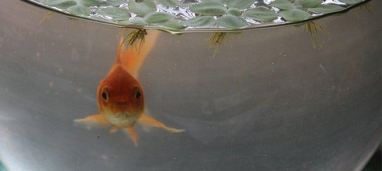 Dirty fishbowl