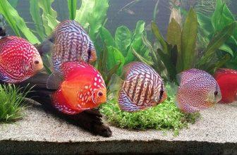 15 Most Popular Freshwater Fish