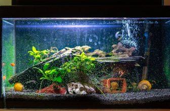 Aquarium Maintenance: The Complete Guide