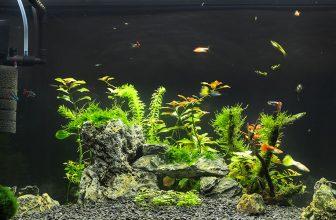 Best Aquarium Water Pumps