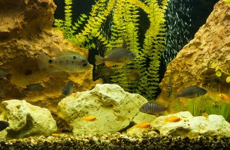 Cloudy Fish Tank: Causes and How to Make Your Aquarium Clear
