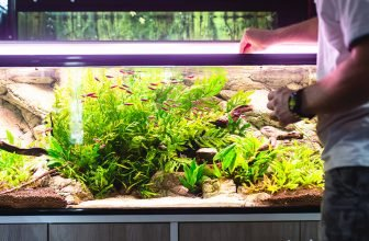 How to Properly Feed Your Aquarium Fish