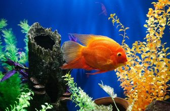 How Do Fish Sleep: Everything You Need To Know