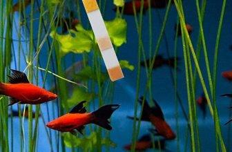 Best Aquarium Water Test Kits