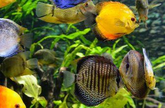 how to safely adjust ph in your aquarium