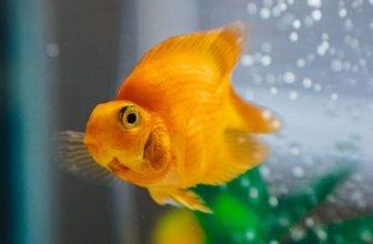 Best Fishbowls
