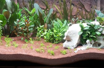 How to Clean and Prepare Gravel for a New Aquarium