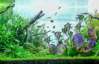 cycling fish tank everything you need to know